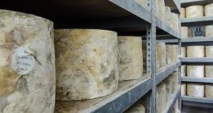 Birra e formaggi: gli abbinamenti con i Presidi Slow Food stranieri